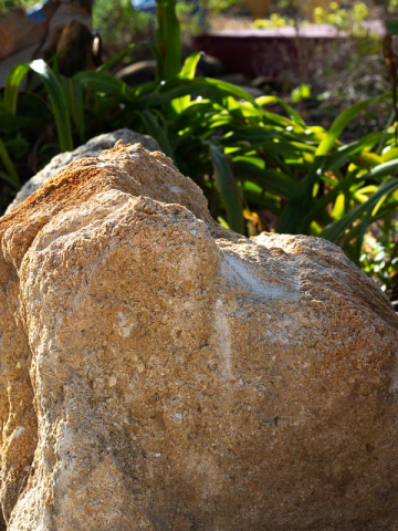 Light coquina boulder with large, natural holes